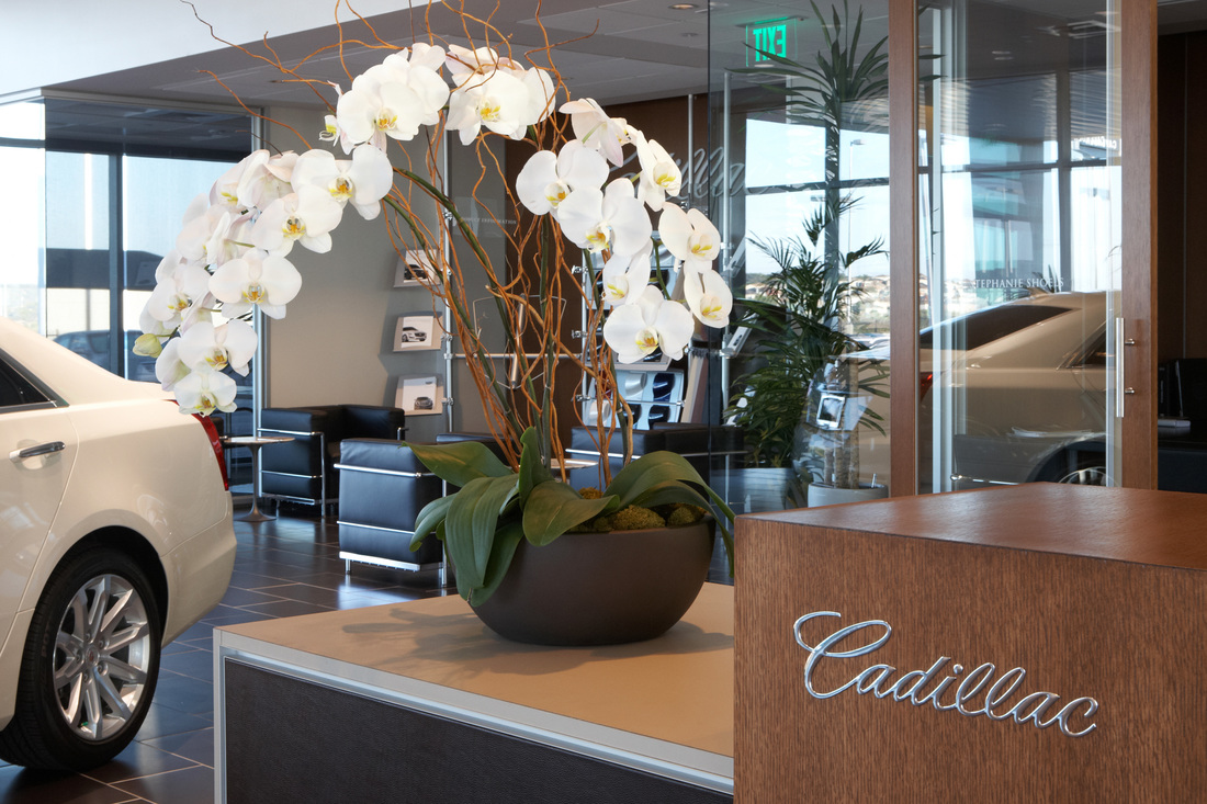 Cavender Cadillac 360zone Com Producers Of Virtual Tours